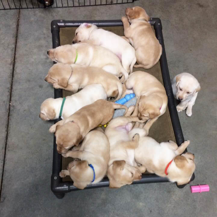 puppies bed 1