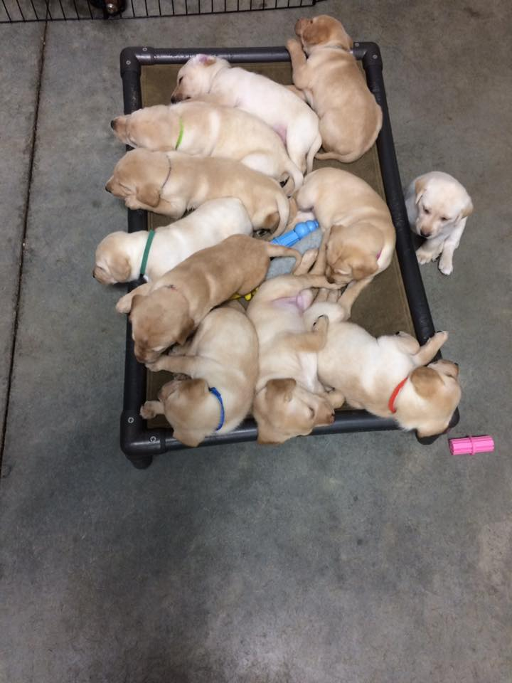 puppies bed
